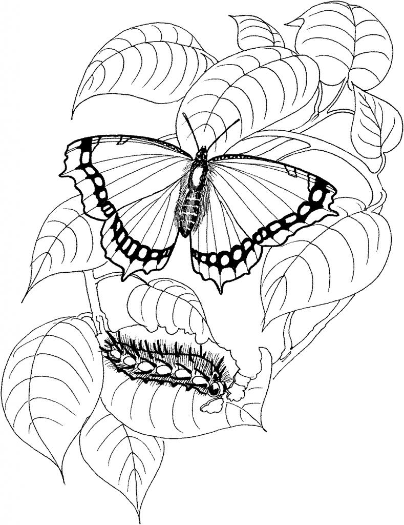 1) Desenho de borboleta para colorir