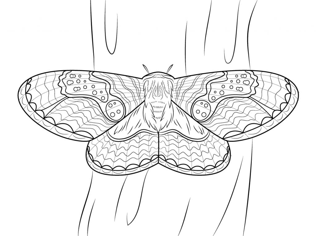 12) Molde de borboleta para colar no caderno