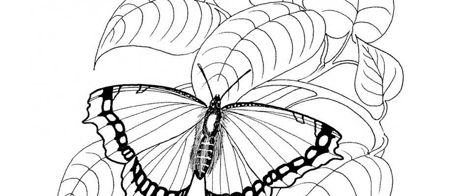 molde-borboleta-para-imprimir